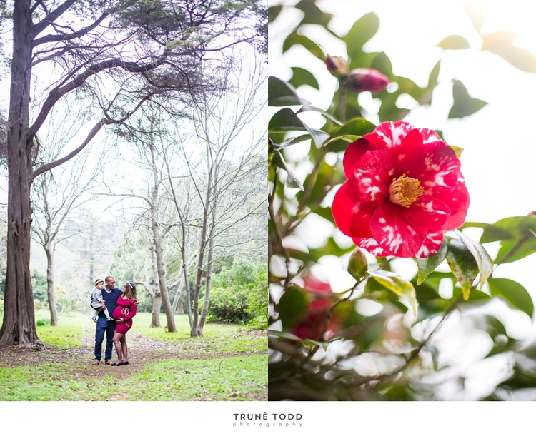 Cape Town maternity photographer-Prinsloo family maternity